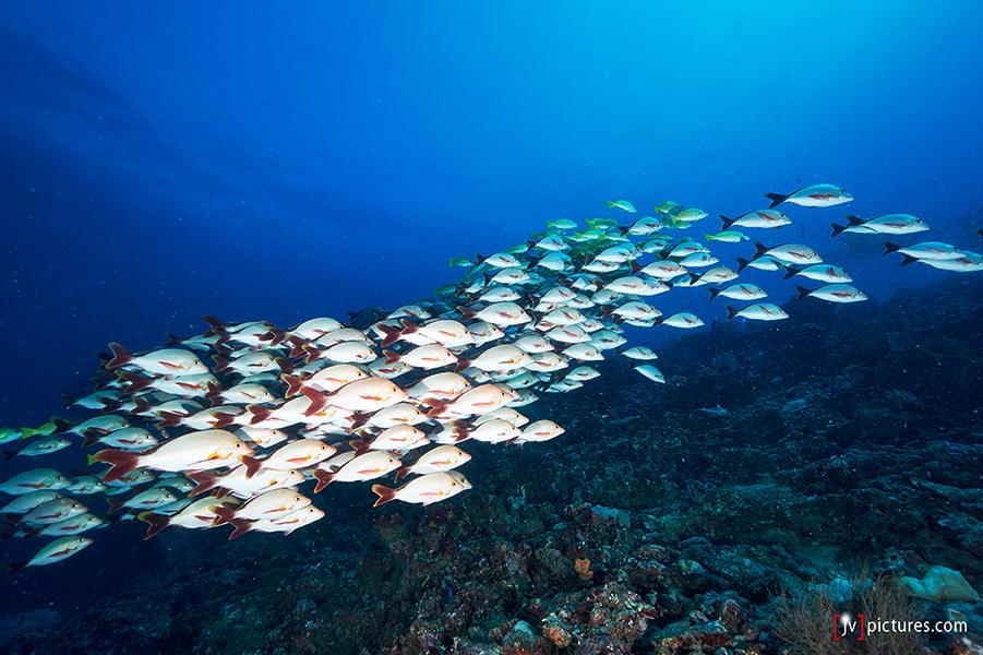 1308-Malediven-0156.jpg