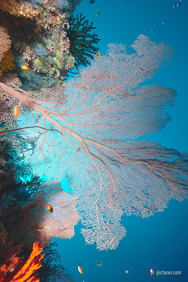 1308-Malediven-0045.jpg
