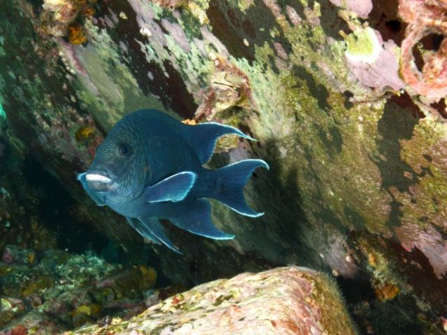 Fish 8 - San Carlos.jpg