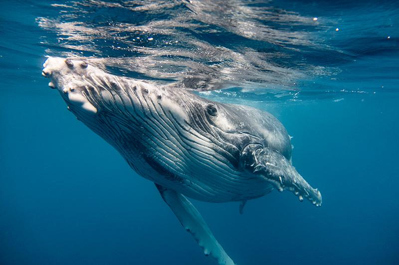 Whalebaby1web.jpg
