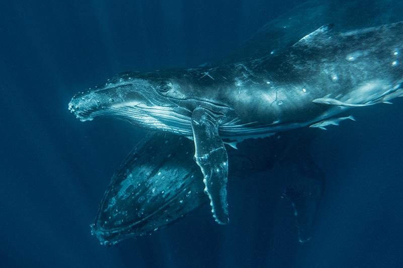 whalemomcalf.jpg
