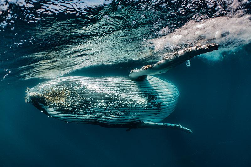 Whaleclosepass.jpg