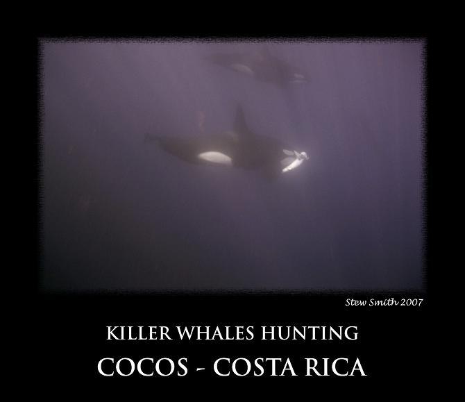 orca3small.jpg