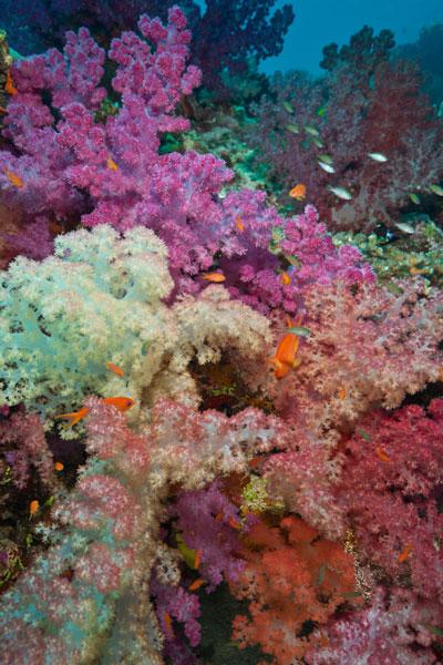 20100829_Fiji_0020.jpg