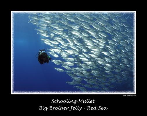 silverfish018.jpg