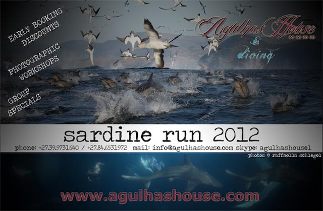 Sardine_Run_ad_2012_2.jpg