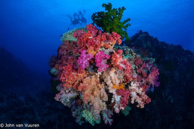 Taveuni-4651.jpg