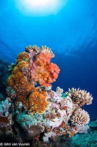 Taveuni-4994.jpg