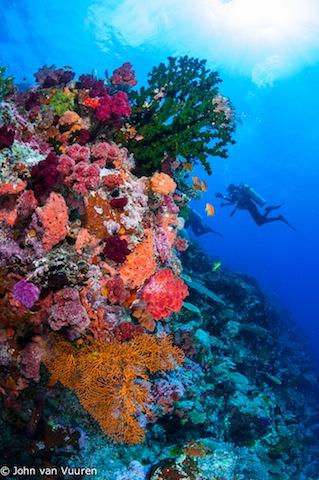 Taveuni2012-4497.jpg