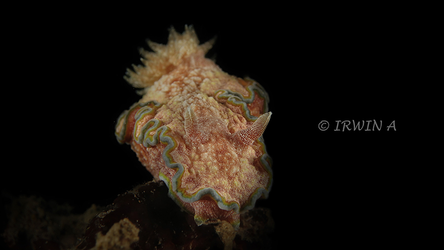 nudibranch2-2.jpg