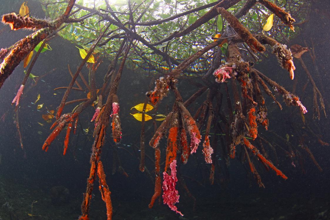 Mangrove-Scene-3.jpg