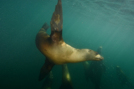 Sea Lion - Zoom! (Web).jpg
