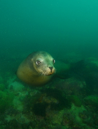 Sea Lion - Bottom Sitting (Web).jpg
