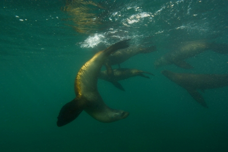 Sea Lion - Flipping (Web).jpg