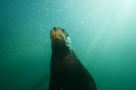 Sea Lion Bubbles (Web).jpg