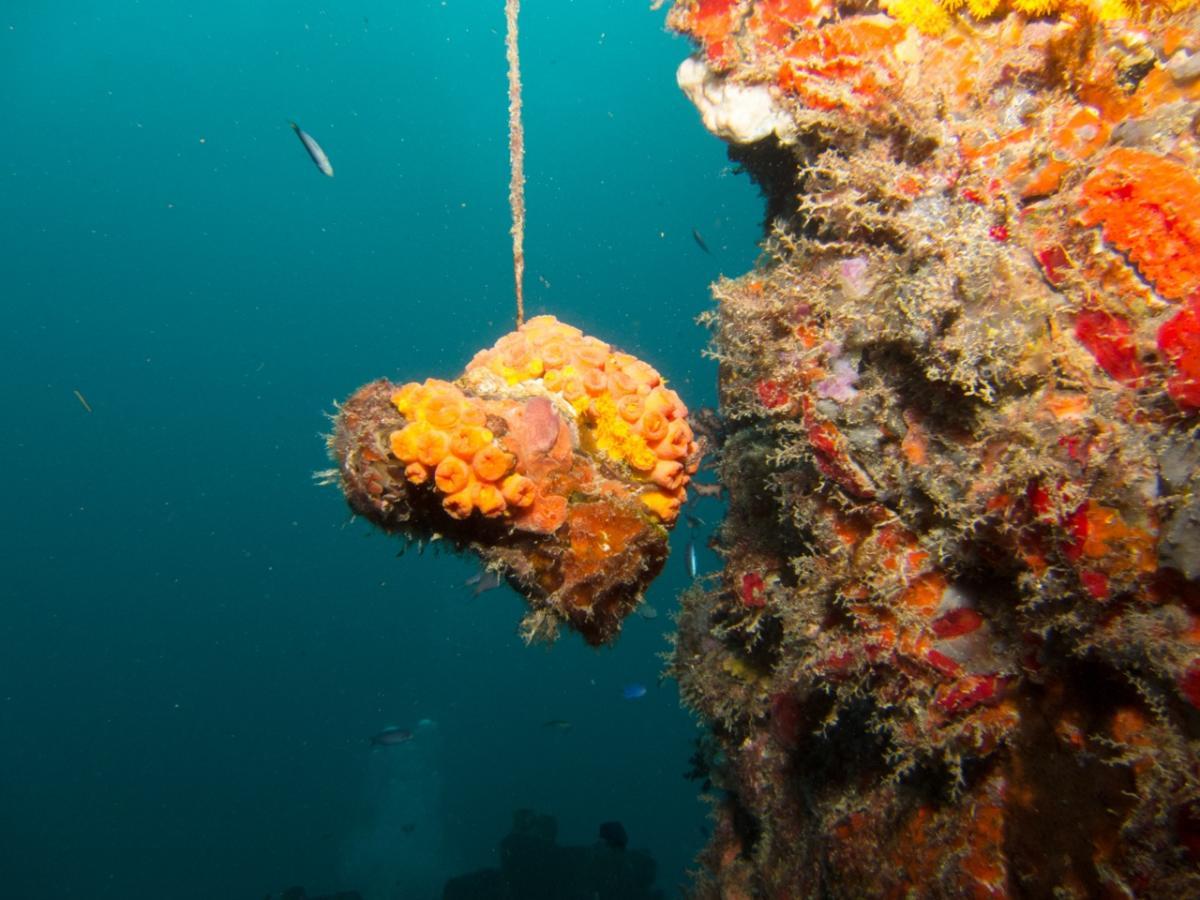 hanging coral2.aspx.jpg