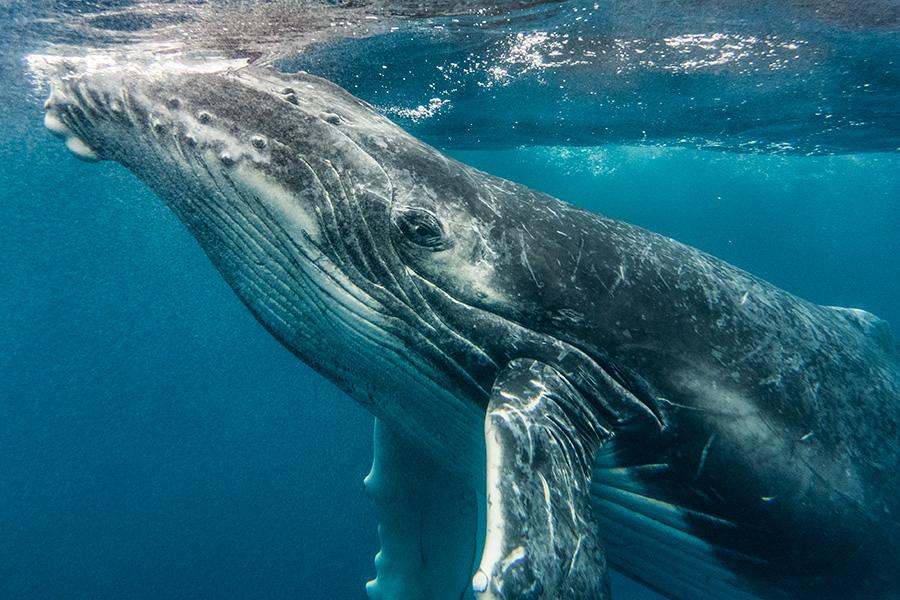 Whalecalfclose.jpg