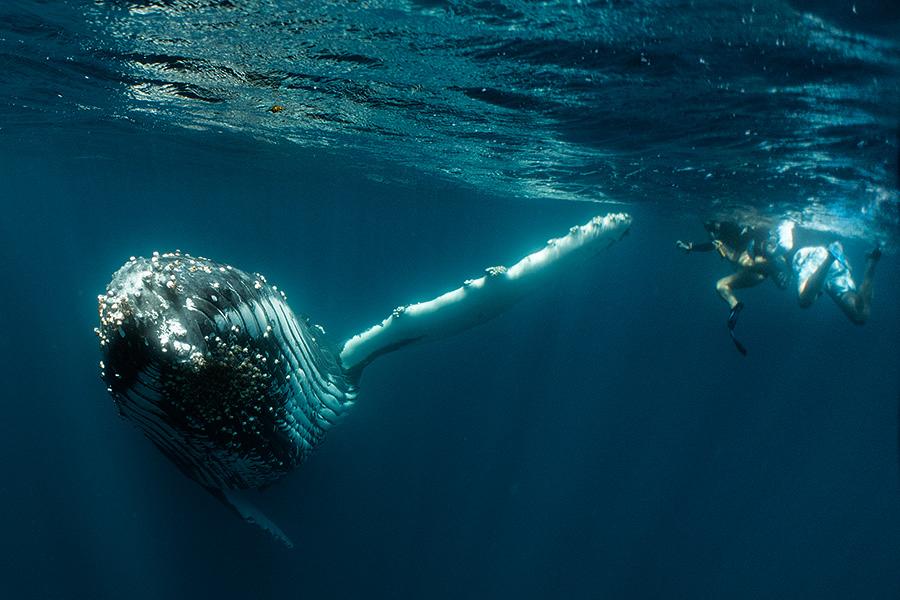 whale7.jpg