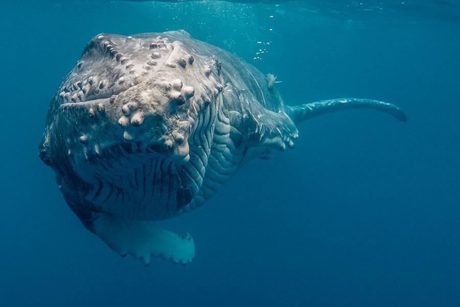 whalecalf6.jpg