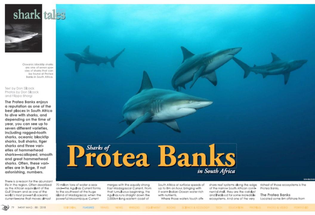 Protea Banks_Don Silcock_Cover.jpg