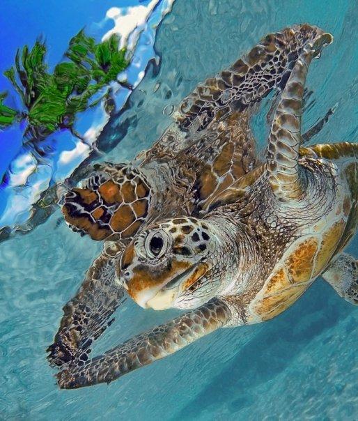 autopsea_turtle.jpg