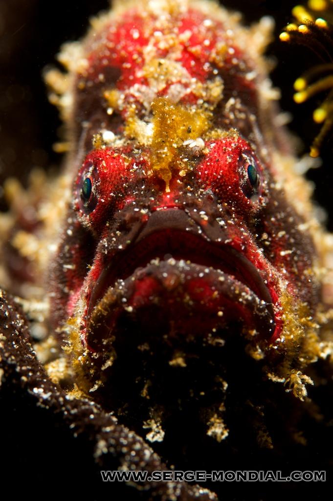 byebye_frogfish.jpg