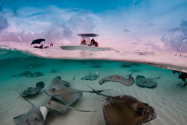 Cayman-312.jpg
