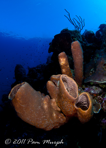 Cayman_2011_web__2_of_2_.jpg