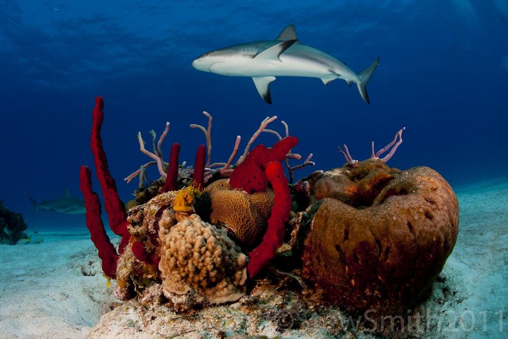 reef_and_sponge1000.jpg