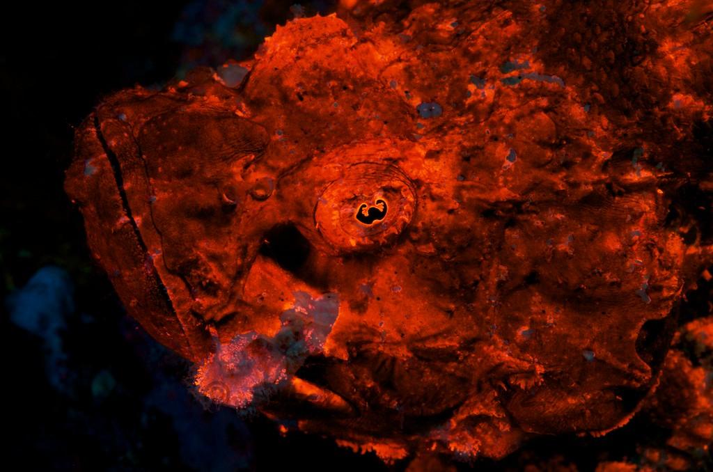 Fluo Diving2.jpg