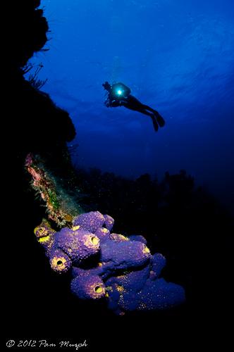 Grand Cayman -461.jpg