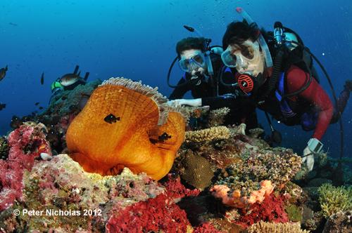 Taveuni_103.jpg