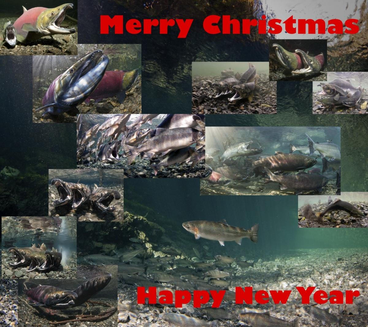 Merry Christmas 2012.jpg