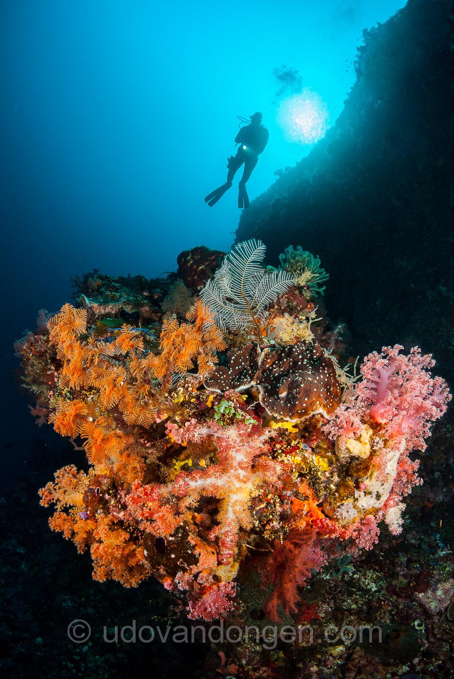 Pulau reta-1.jpg