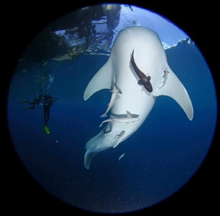 Whalesharks-17.jpg