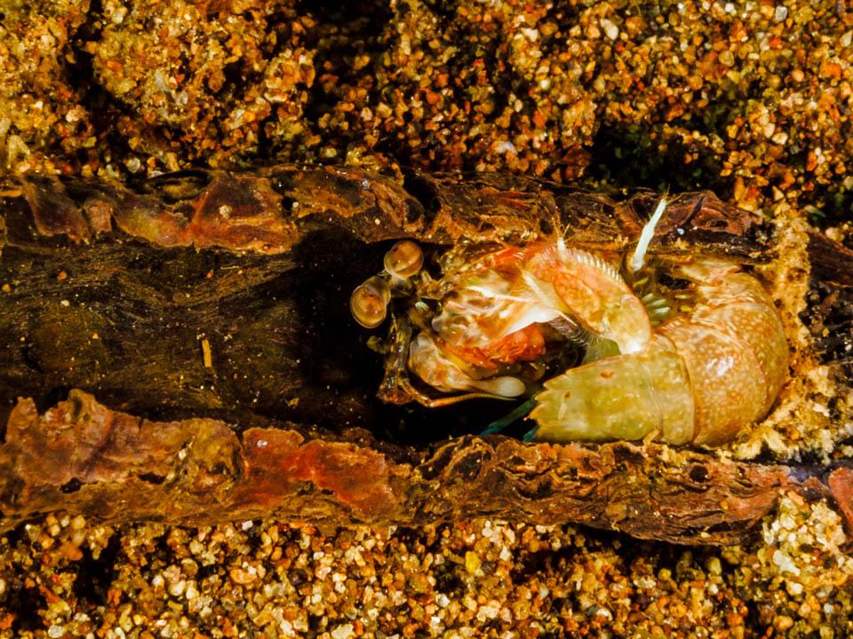 Curled Mantis.jpg