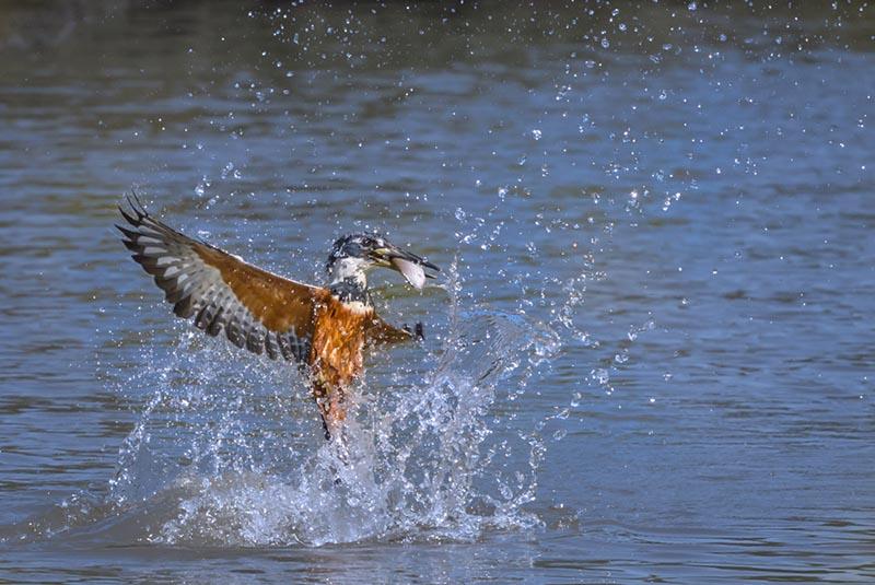 130905-pantanal13-1508-Edit.jpg