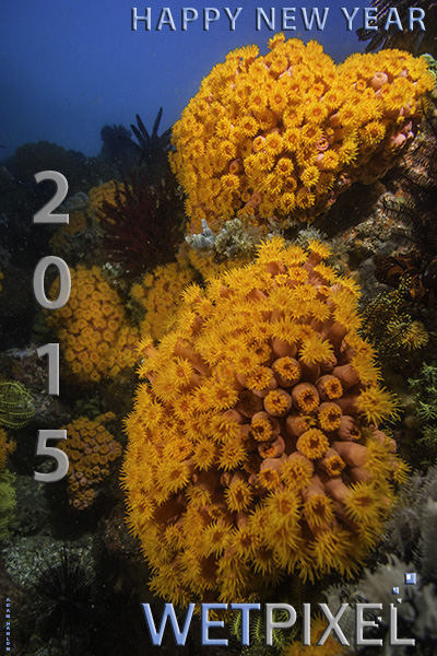 WP_NEW-YEAR_2015_600.jpg