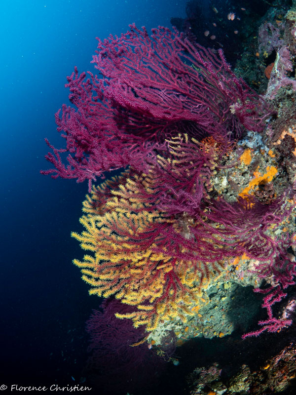 Grotte-a-peres-gorgones-jaune-et-rouges-w-2.jpg
