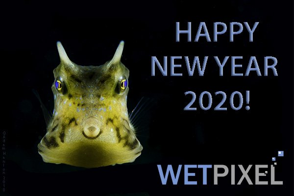 new_year_20_600.jpg