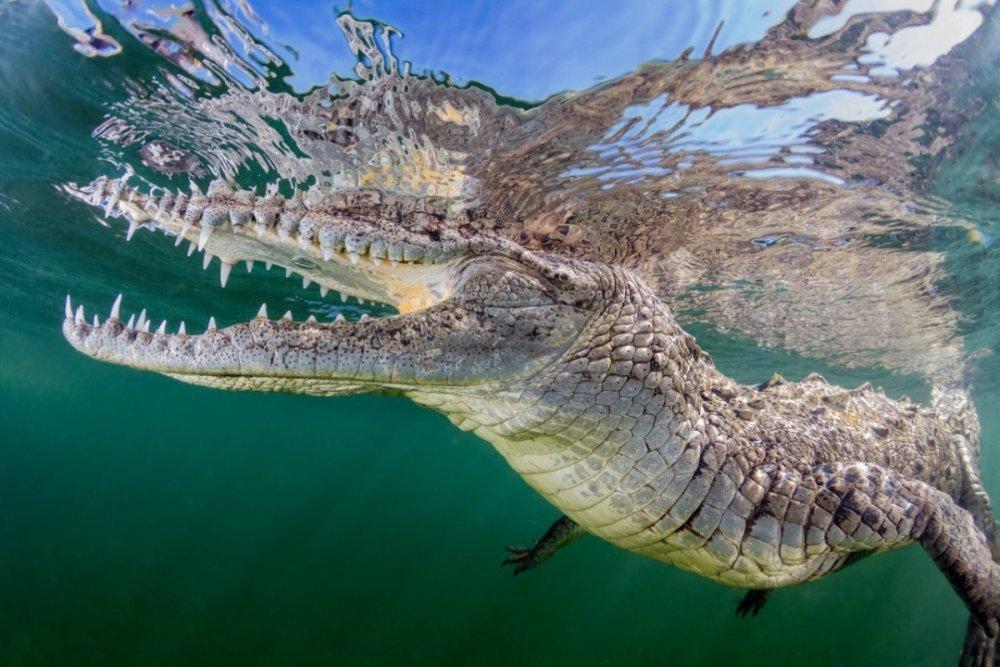 Croc - 1.jpg