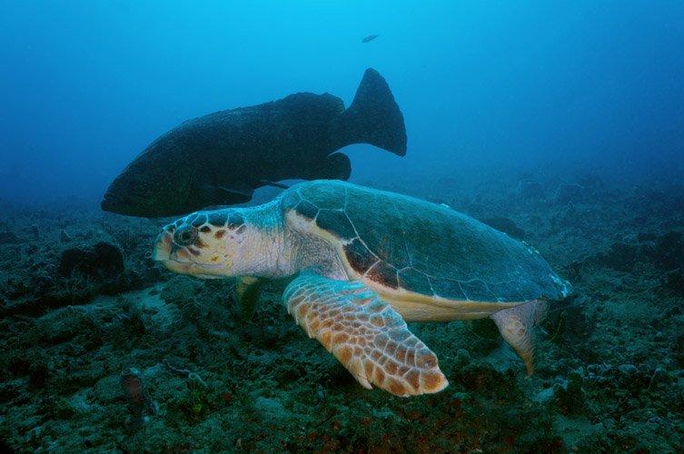 Loggerhead Turtle - DSC02681a lr.jpg