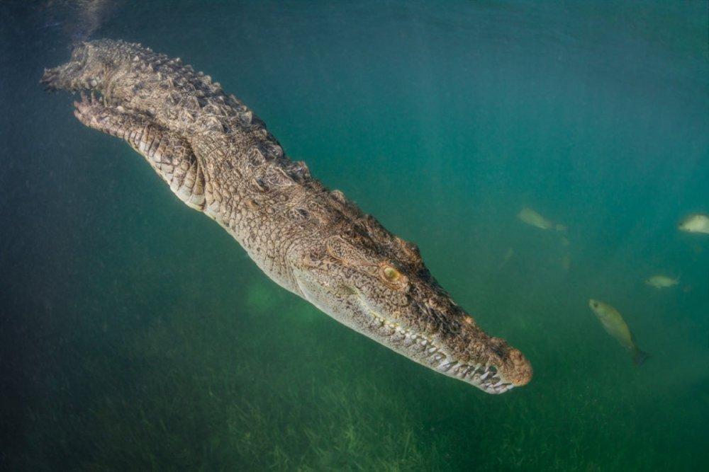 Croc - 2.jpg