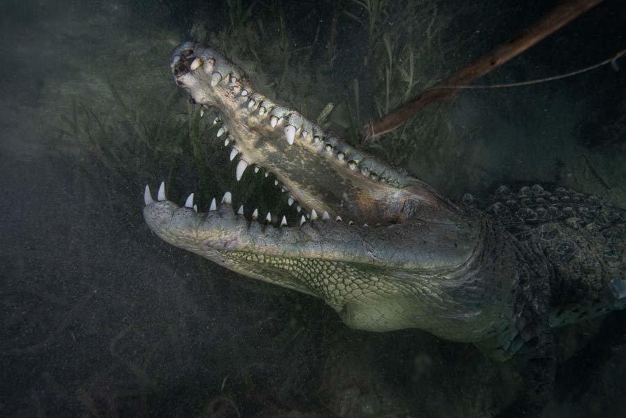 Cuba Crocs-1.jpg