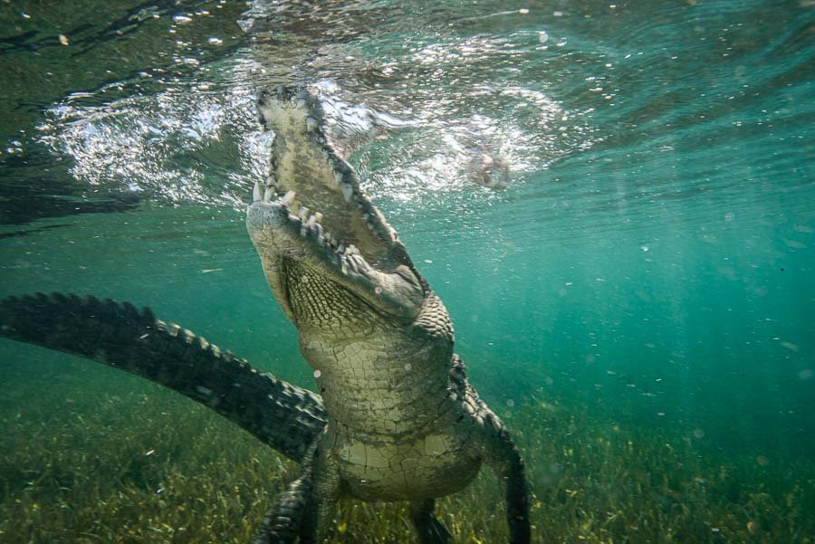 Cuba Crocs-1-2.jpg