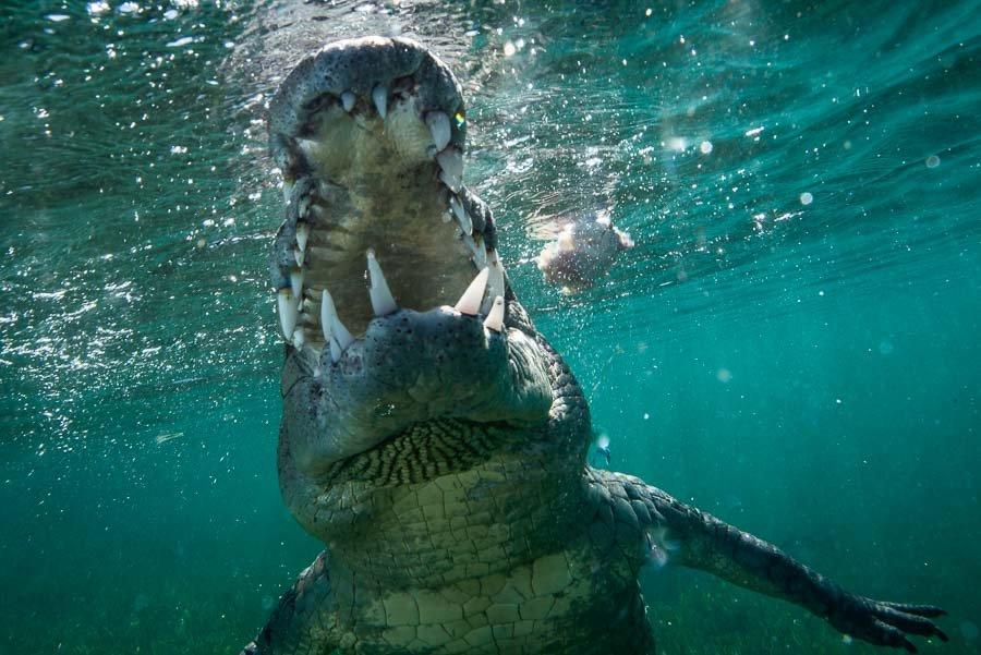 Cuba Crocs-2.jpg