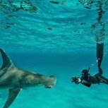 Sharkhottub