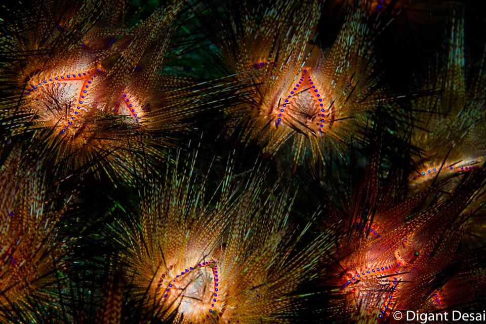 Fireworks 2021.jpg