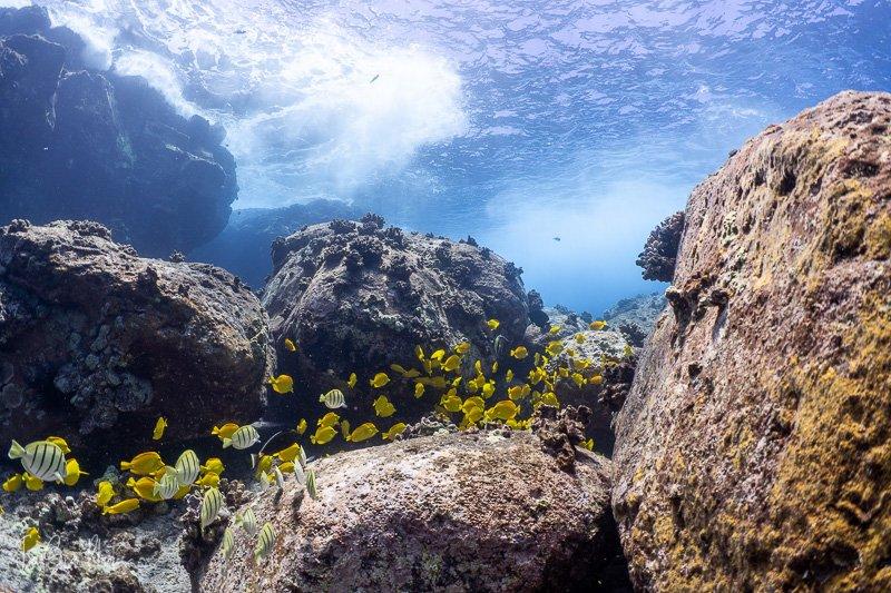 reef-ambient.jpg