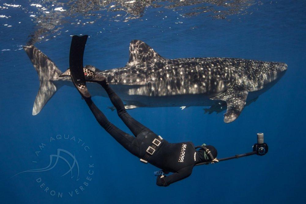 T-Boyd-whale-shark-copy.jpg